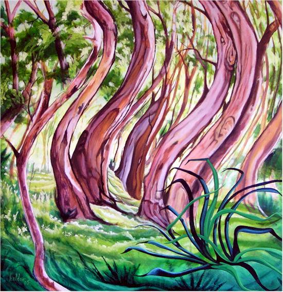 Stephen Kaldor - Rainforest Dancing